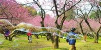 昨日湘南最高温达29℃ 回暖天气催开早樱缤纷 - 气象网
